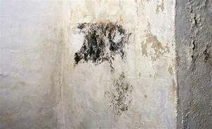 Graue Flecken An Der Wand : anti schimmel farbe schimmel entfernen jaeger ~ Markanthonyermac.com Haus und Dekorationen