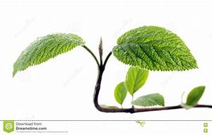Young Leaves Stock Images - Image: 19119334
