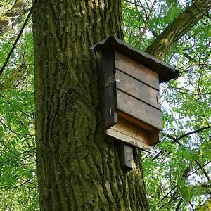 Bienenfalle Selber Bauen : fledermausk sten und nisth hlen selber bauen ~ Markanthonyermac.com Haus und Dekorationen