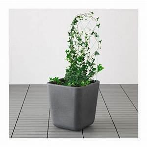 Ikea Socker Blumenständer : bars krukspalj ikea blommor pinterest blommor ~ Markanthonyermac.com Haus und Dekorationen