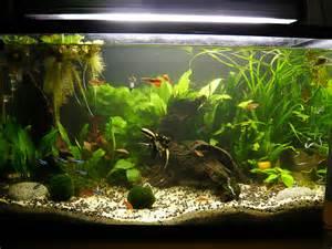 aquarium d eau douce d 233 butant