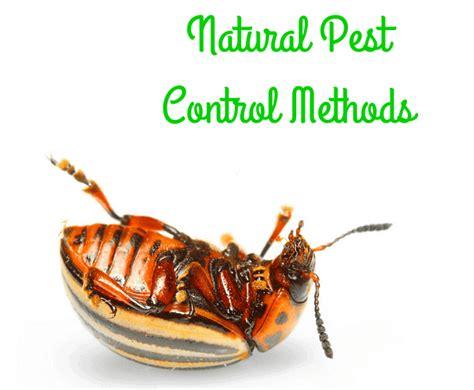 Natural Garden Pest Control  A Healthier & Safer Solution