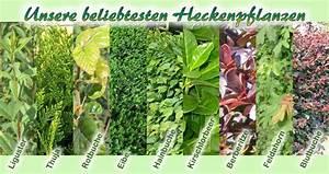 Sichtschutz Pflanzen Blühend : 39 besten winterharte stauden bilder auf pinterest blumengarten mein garten und verandas ~ Markanthonyermac.com Haus und Dekorationen