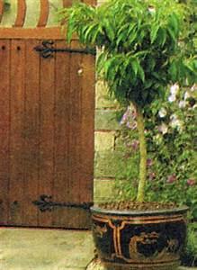 Gräser Kübel Terrasse : gartenschlumpf obstpflanzen aus dem k bel f r balkon oder terrasse ~ Markanthonyermac.com Haus und Dekorationen
