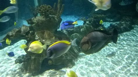 aquarium sea picture of aquarium sea val d europe marne la vallee tripadvisor