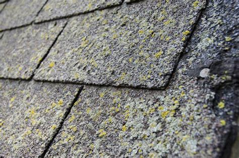 Preventing Moss And Algae Growth On Your Roof How To Repair Rv Roof Repairs Ocala Fl Mobile Home Replacement Options Metal Canopy Toyota Highlander Rack Cover Asphalt Shingle Adhesive Galvanized Roofing Panels Abc Supply Company