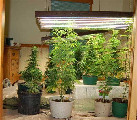 indoor cultivation tips for marijuana growers