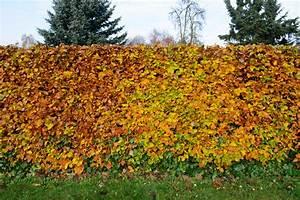 Wie Viele Pflastersteine Pro M2 : rotbuchenhecke wie viele pflanzen pro meter ~ Markanthonyermac.com Haus und Dekorationen