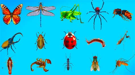 Learning Animals Hd Insects Names And Sounds For Children Educational Real Animals For Kids