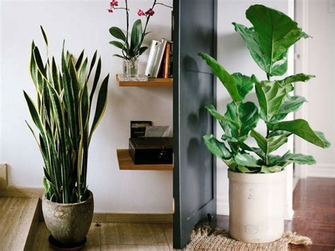 Home Decor Plants : Stylish Ways To Use Indoor Plants In Your Home Décor