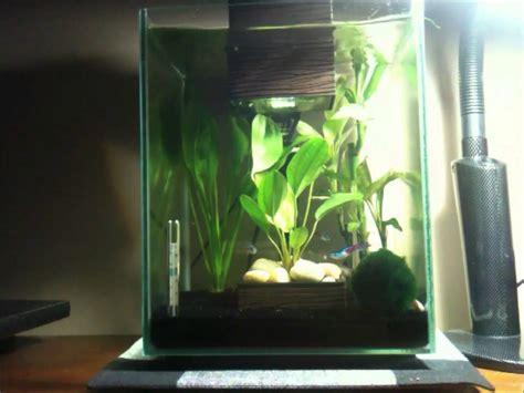 5 gallon fish tank neon tetra neon tetra tank 1 5 gallon cube led aquarium kit 2017