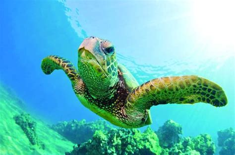 Catamaran Snorkeling Kona Hawaii by Turtle Canyon Snorkel Cruise By Catamaran Provided By