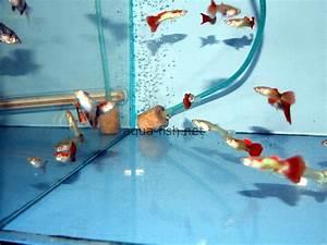 Guide, forum and suppliers of aquarium air stones