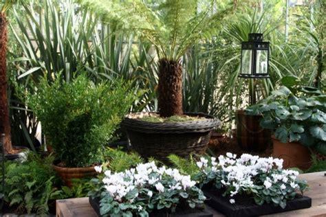 d 233 co choisissez vos plantes pour embellir votre jardin d hiver