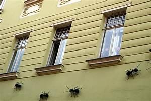 Spinnen Fernhalten Wohnung : ameisen bek mpfen welche mittel gegen ameisen helfen ~ Whattoseeinmadrid.com Haus und Dekorationen