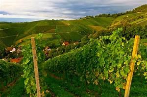 Fertiggaragen Baden Württemberg : vineyards offenburg baden w rttemberg germany blaine harrington iii ~ Whattoseeinmadrid.com Haus und Dekorationen