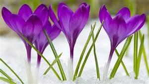 Garten Was Tun Im März : garten im m rz tipps und ratschl ge f r die warme jahreszeit ~ Markanthonyermac.com Haus und Dekorationen