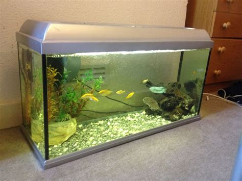 fish tank and fish for sale reading berkshire pets4homes