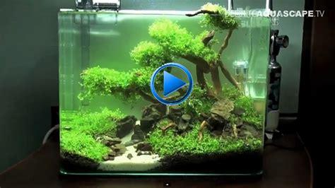 crevettes aquarium 42