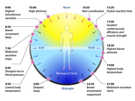 Sleep Wake Cycle by The New Science Of Sleep Wake Cycles And How To Improve