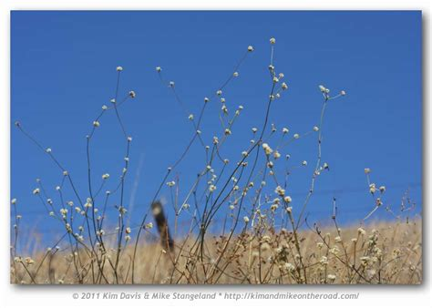 apodemia mormo c s ca coast ranges foodplants
