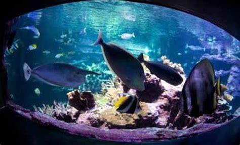 les poissons tropicaux de l aquarium abyssal picture of la cite de la mer cherbourg octeville