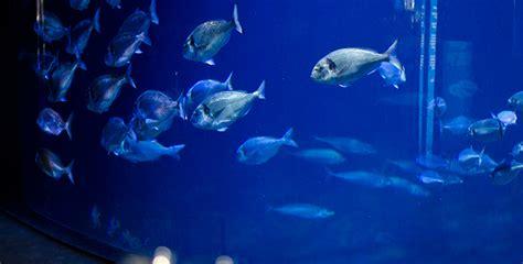 of the aquarium de select book select