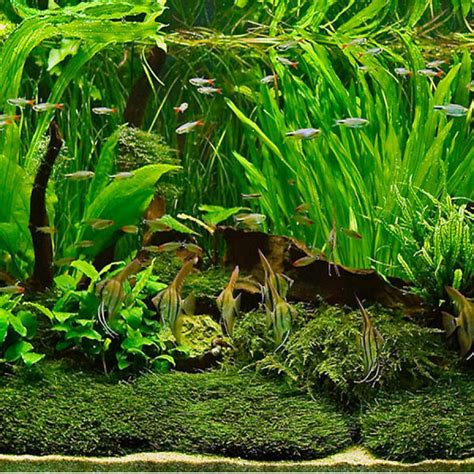 growing live aquarium plants a number of considerations on subject