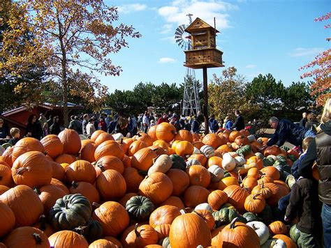 100 caledonia pumpkin patch mississippi country