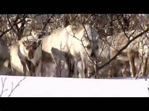 Suddenly Sámi. Distributed by Galloping Films - YouTube