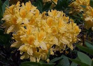 Garten Blumen Pflanzen : garten blumen pflanzen pflege ~ Markanthonyermac.com Haus und Dekorationen