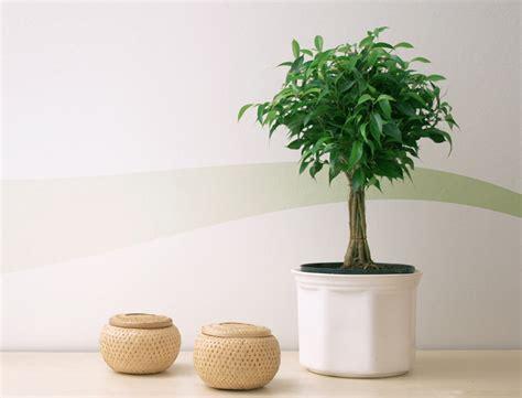 plantes et fleurs pour une maison feng shui femme actuelle
