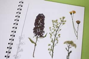 Blätter Pressen Schnell : ein herbarium anlegen labb blog ~ Markanthonyermac.com Haus und Dekorationen