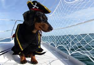 Dog Boat Captain by Dog Dresses As Pirate Sailor And Shark On Caribbean