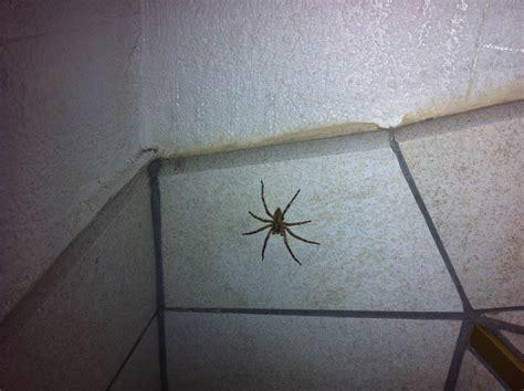araignee dans une maison swyze