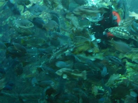 Monterey Scuba Dive Boats by 404 Page Not Found Error Ever Feel Like You Re In The