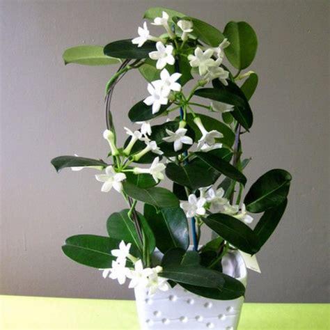 plantes 224 fleurs d int 233 rieur fleurance