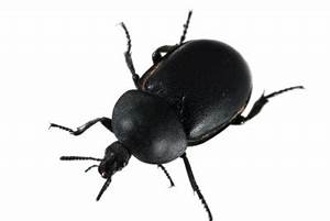 Mücken In Der Wohnung Was Tun : mini k fer in der wohnung was tun ~ Markanthonyermac.com Haus und Dekorationen