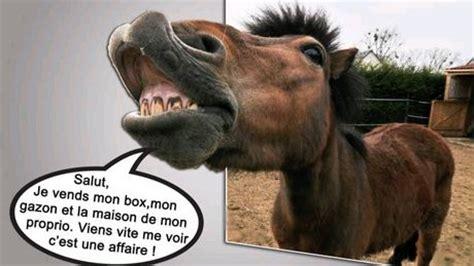 annonce poney tout sur le cheval