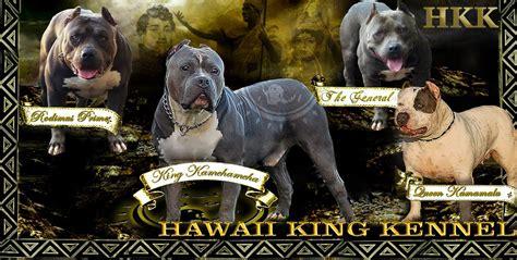 Hawaii Pitbull Puppies For