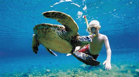 Imagenes De Barcos Pequeños by Snorkel Con Tortugas Marinas En Akumal Cancun Adventure