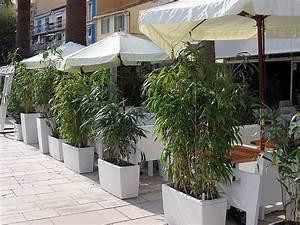 Gräser Kübel Terrasse : bambus als sichtschutz f r die gastronomie kaufen ~ Markanthonyermac.com Haus und Dekorationen